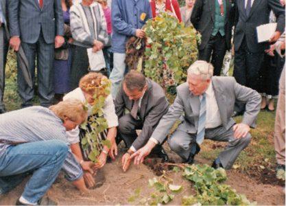 Landrat Schumm setzt mit Rüdiger Jakesch und der Weinkönigin einen Rebstock